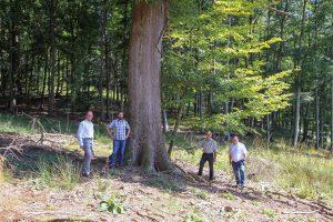 100 Bäume für Naturschutz und Artenvielfalt