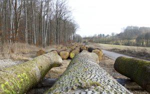 Corona-Pandemie hat noch keine Auswirkungen auf den Wertholzmarkt