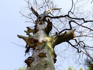 Landesverband Lippe weist dank EU-Förderung in Höhe von rund 270.000 Euro 1.016 Biotop- und Altholzbäume aus