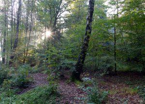 Stellenausschreibung: Revierleitung Forstrevier Schieder