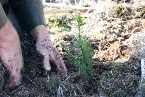 Pflanzung mit PEFC und ProFagus
